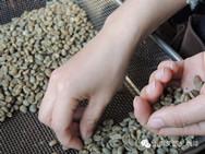 生豆を選び